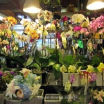 Our favourite flower shop on Ganville Island