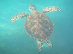 Canon PowerShot D30 turtle raw image